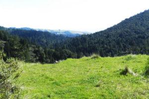 California hills