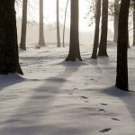 IBME Mindfulness Teen Story Snow Woods Footsteps